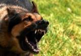 И снова о братьях наших опасных: собаки нападают на людей около стадиона «Витязь»
