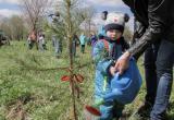 Живи, Лес! Во время всероссийской акции вологжане высадят свыше 160 тысяч деревьев