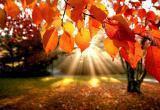 Вместо обещанного снега в октябре вологжан ждут солнечные дни