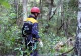 В Вытегорском районе в лесу нашли тело 55-летнего мужчины. Идет следствие