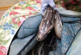 Выживших в смертельной аварии в Бабушкинском районе экзотических животных отдадут родственникам погибших