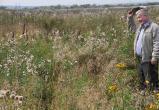 В Вологодской области почти 50 процентов земли — заброшенные пашни