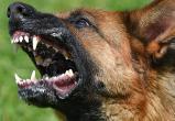 Три тысячи рублей заплатит хозяин овчарки за агрессивное поведение питомца