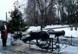 Петровская елка вновь появится на набережной Вологды