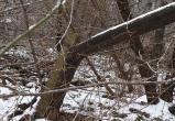 Службы не спешат убирать опасный столб в Вологде