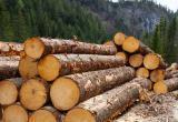 За растрату экс-директор Вашкинского лесхоза отправится в тюрьму