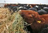 Ферму в Великоустюгском районе оштрафовали на 450 тысяч рублей