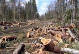 В Белозерском и Вашкинском районах законно воруют лес