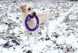 Вологодский мэр и его пес попали на федеральный канал