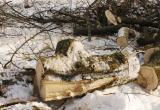 Следователи Вологодчины расследуют мгновенную смерть мужчины в лесу