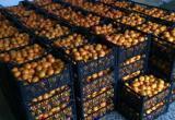 Почти 18 тонн мандаринов исчезли по дороге к покупателю