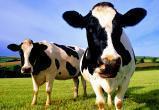 ВиАГРО не помогает! Вологодский аграрный комплекс потерял «пятилетку импортозамещения»