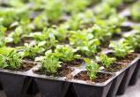 В Вологде инвалидов привлекут к выращиванию растений