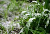 Синоптики предупредили, что летом лета не будет