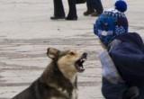 Есть ли в вашем городе/районе агрессивные бездомные собаки?
